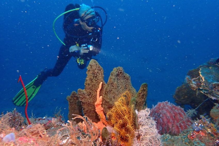 tulamben-taucher-korallen