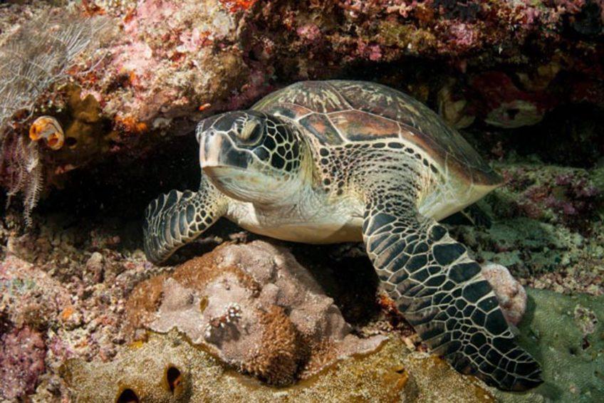 Living Colours Diving Resort Bunaken