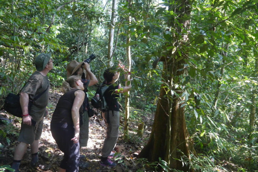 bukit-lawang-jungle-trekking-13
