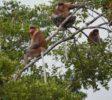 orangutanhouseboattour4