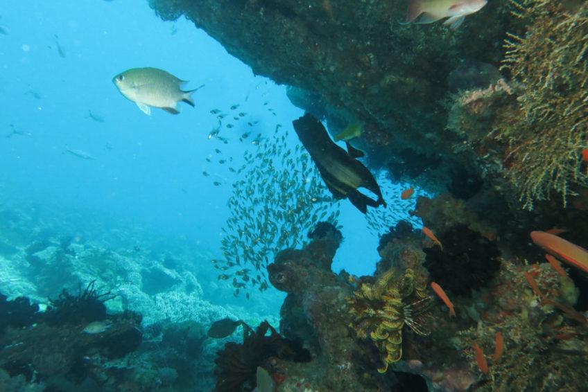 waterworxx-fledermausfisch