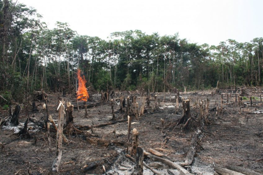 Indonesia's-environmental-issues-deforestation-1-by-internet