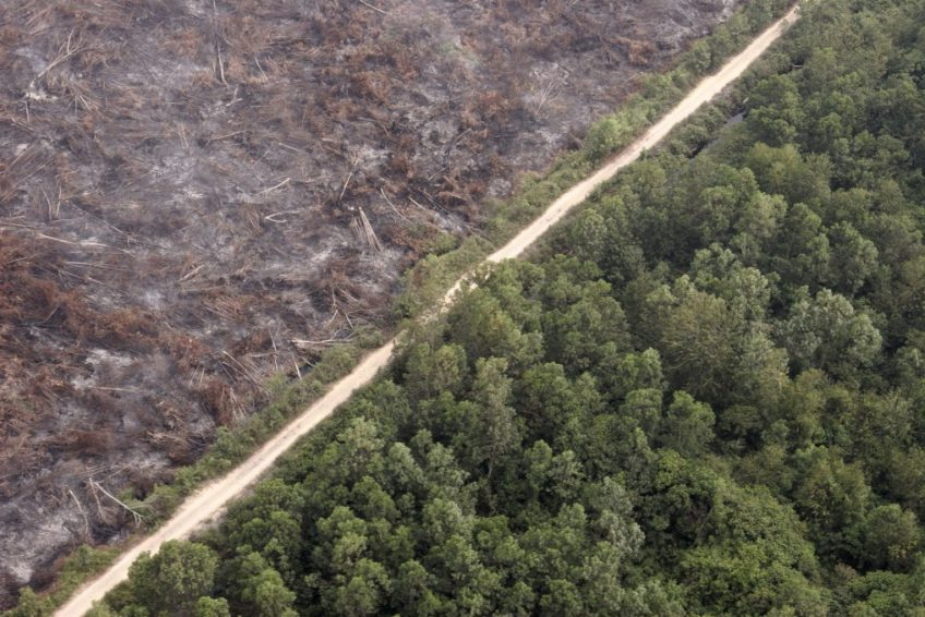 Indonesia's-environmental-issues-deforestation-by-internet