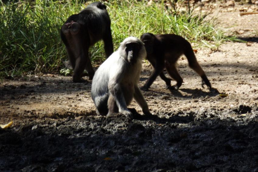 Nantu Forest