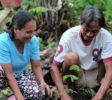 Pflanztraining der Kleinbauern (2) (1)