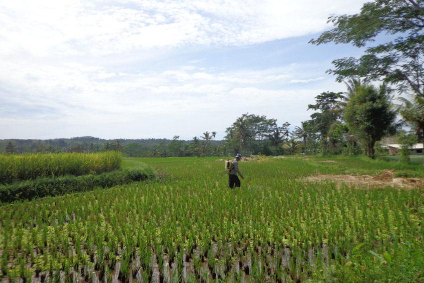 iwan-fahrer-guide-lombok-16