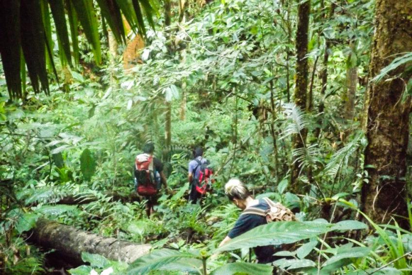 Manembo Nembo Naturschutzgebiet Nord-Sulawesi