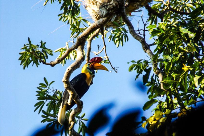 Manembo Nembo Naturschutzgebiet
