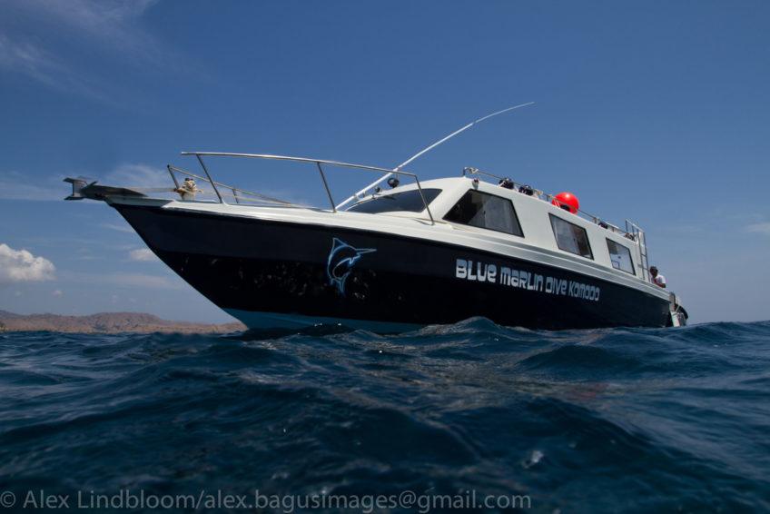 blue-marlin-komodo-liveaboard-29