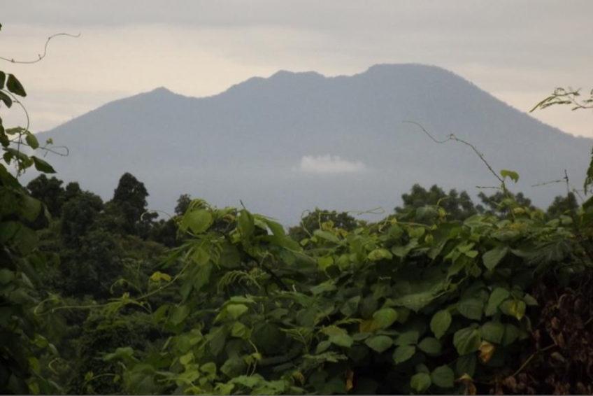 Tangkoko-Batuangus-Duasaudara Naturreservat 10