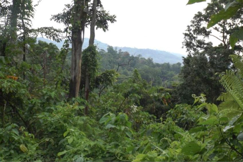 Tangkoko-Batuangus-Duasaudara Naturreservat 2