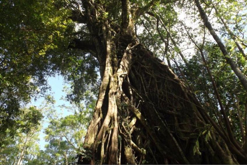 Tangkoko-Batuangus-Duasaudara Naturreservat 5