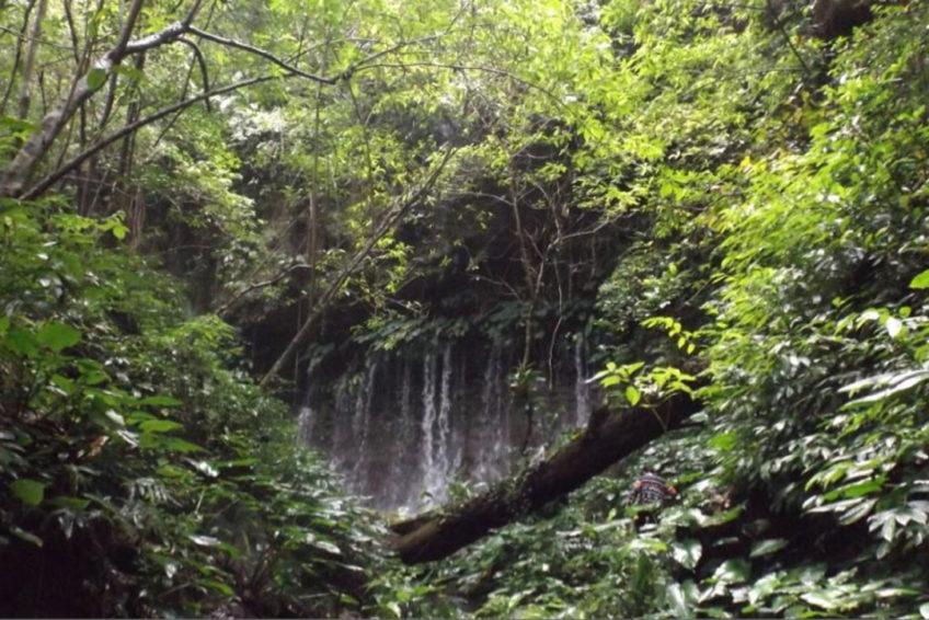 Tangkoko-Batuangus-Duasaudara Naturreservat 6