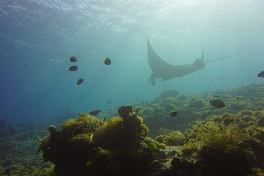 Neren Diving Komodo