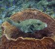 Tauchen-Komodo-Nationalpark-fische-1