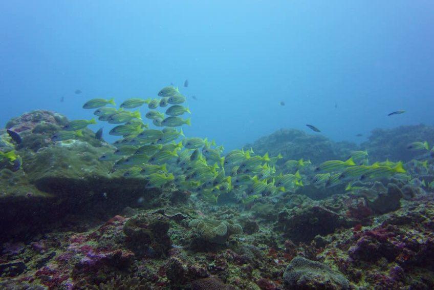 blue-corner-dive-lembongan