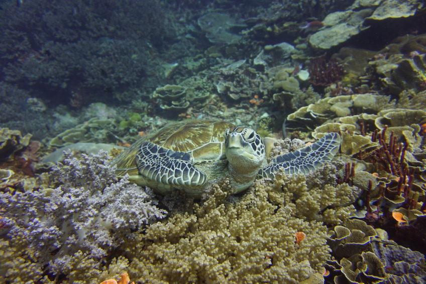 neren-diving-komodo-18