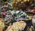 neren-diving-komodo-6