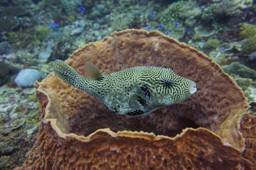 neren-diving-komodo-7
