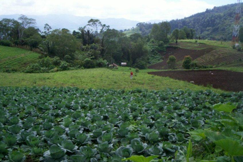 Minahasa Tour-Green_Fields