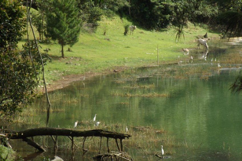 Minahasa Tour-Lake_linow_birds_cows
