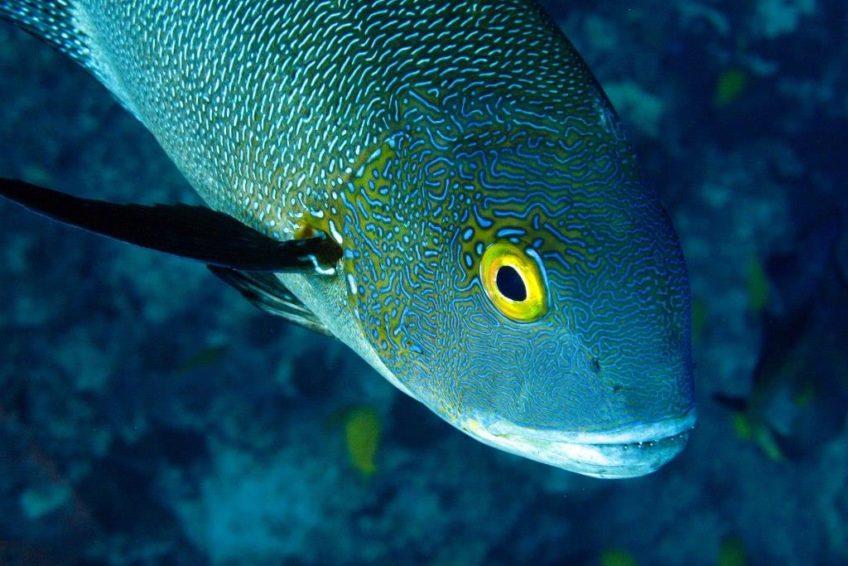 Bluemotion-Dive-Banda-Inseln-1