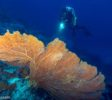 Bluemotion-Dive-Banda-Inseln-2
