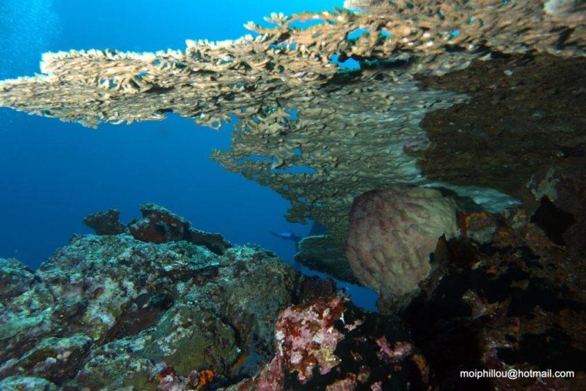 Bluemotion-Dive-Banda-Inseln-4
