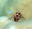 Bluemotion-Dive-Banda-Inseln-5