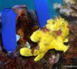 Bluemotion-Dive-Banda-Inseln-7