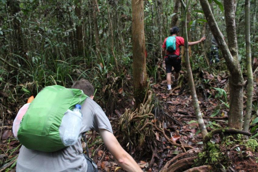 Sebangau Nationalpark