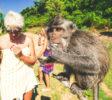 kura-kura-surfcamp-kuta-lombok-monkey
