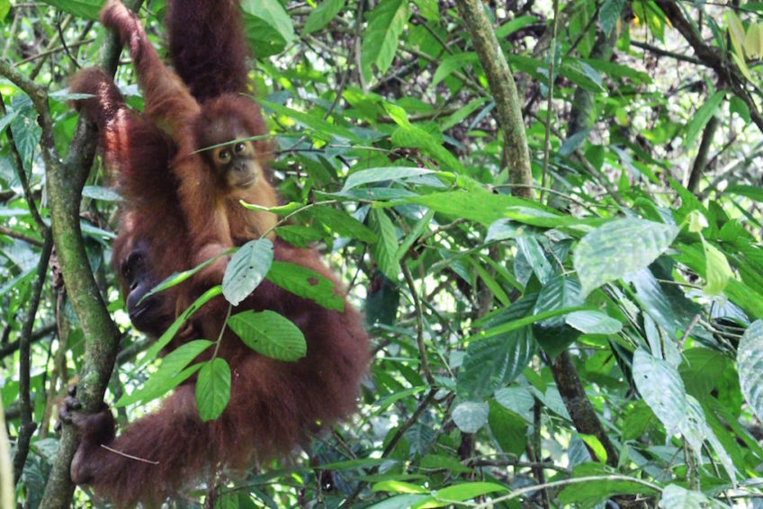Indonesien-Rundreise-Erlebe-Fernreisen-3