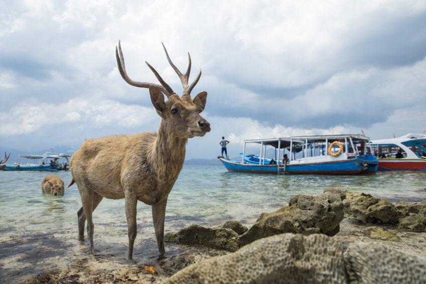 Indonesien-Rundreise-Erlebe-Fernreisen-8