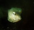 white-sand-divers-babyface