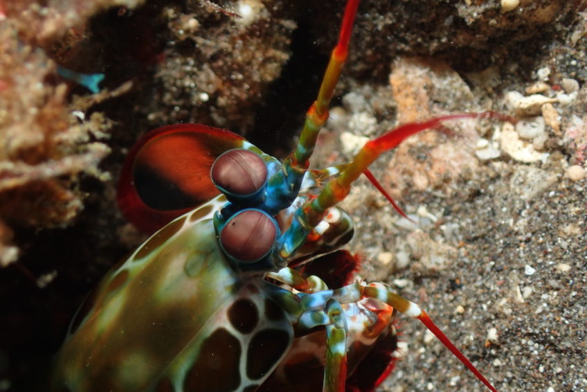 white-sand-divers-lobster