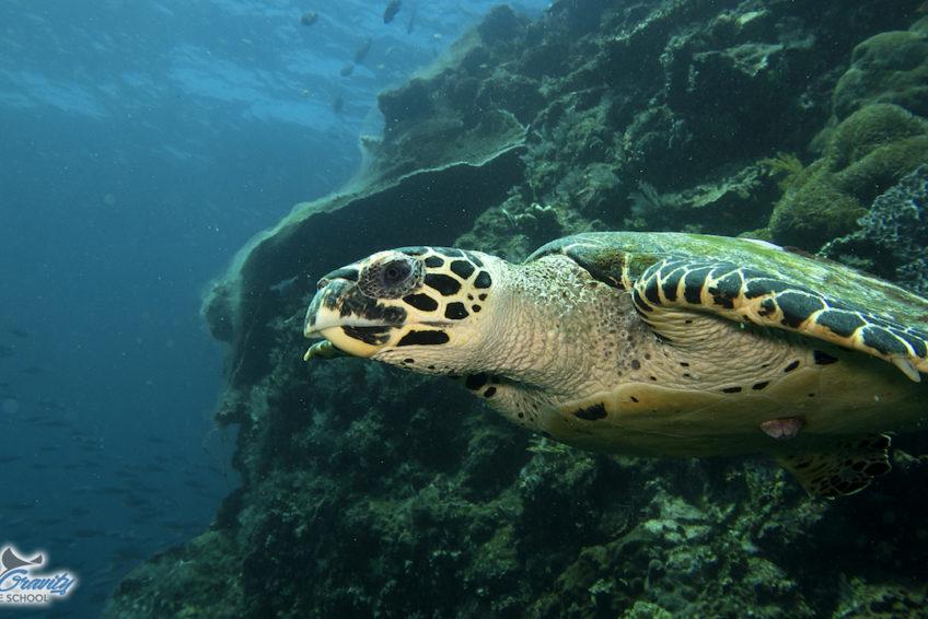 Turtle 22