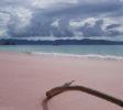 Wunderpus Liveaboard Komodo Pink Beach Padar