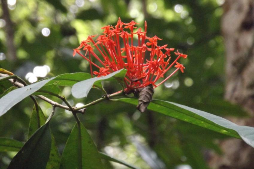 bogani-nani-wartabone-nationalpark-BNW-Blüte