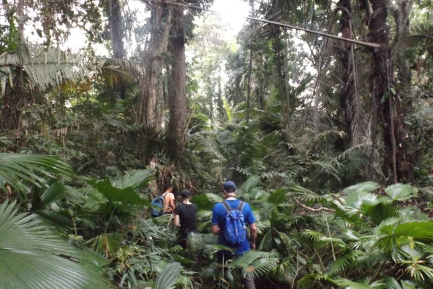 bogani-nani-wartabone-nationalpark-BNW-Dschungeltrekking