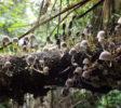 bogani-nani-wartabone-nationalpark-BNW-Pilze