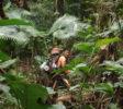 bogani-nani-wartabone-nationalpark-BNW-Ranger_Henry