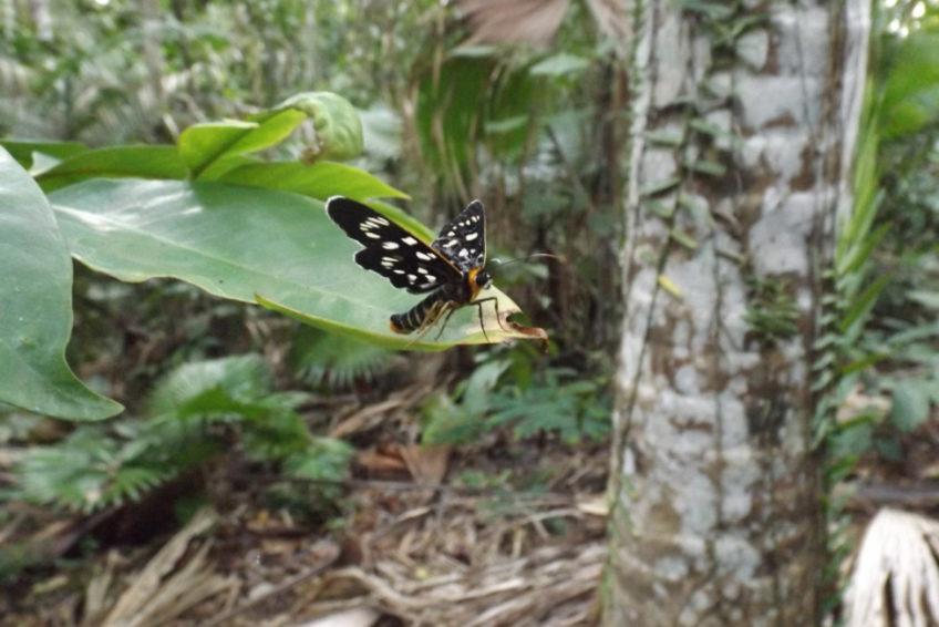 bogani-nani-wartabone-nationalpark-BNW-Schmetterling