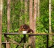 tanjung-puting-nationalpark-8