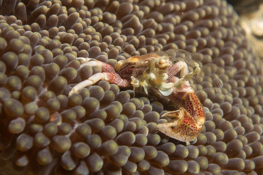 bali-nomadic-dive-safari-abyss-ocean-world-17