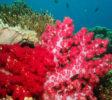 bali-nomadic-dive-safari-abyss-ocean-world-20