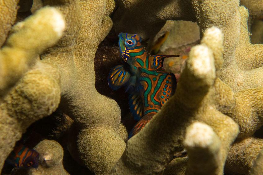 bali-nomadic-dive-safari-abyss-ocean-world-23