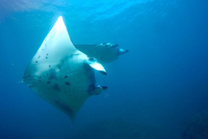 bali-nomadic-dive-safari-abyss-ocean-world-24
