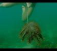 Sumberkima Reef Project