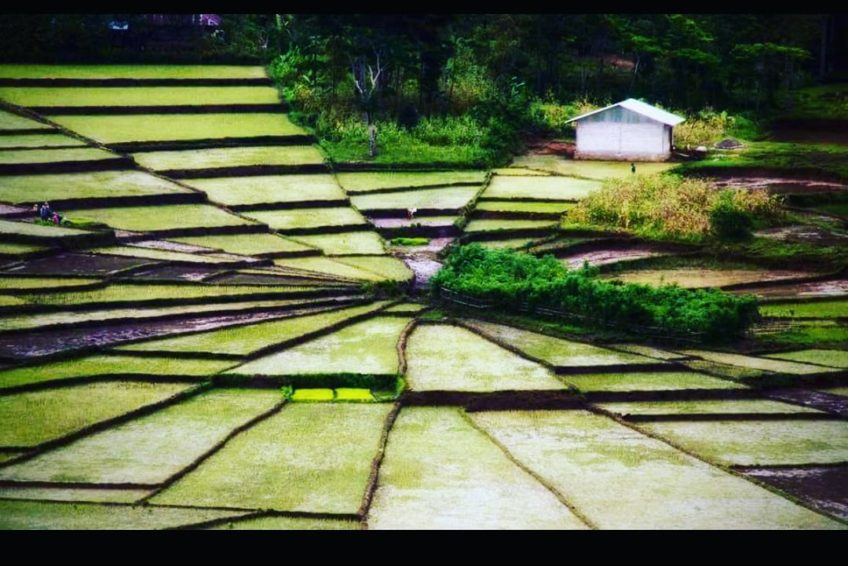 orange-flores-tour-ricefield